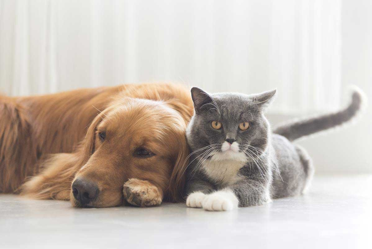about our veterinary practice Lawrenceville, GA