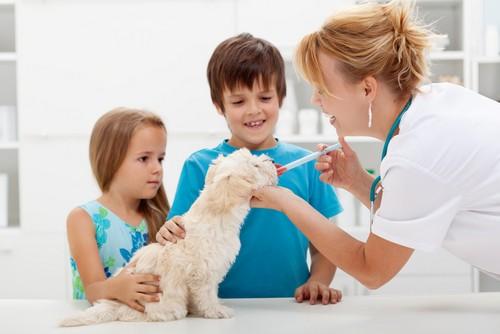 Vaccinations Lawrenceville, GA